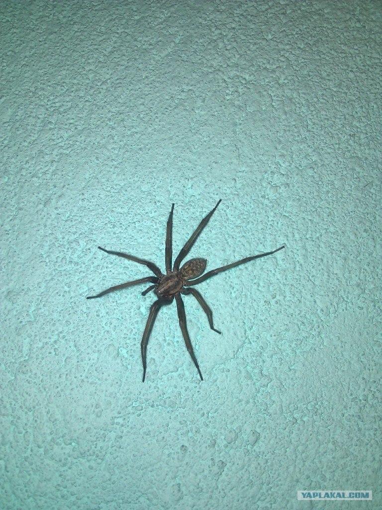фото пауки воронежской области