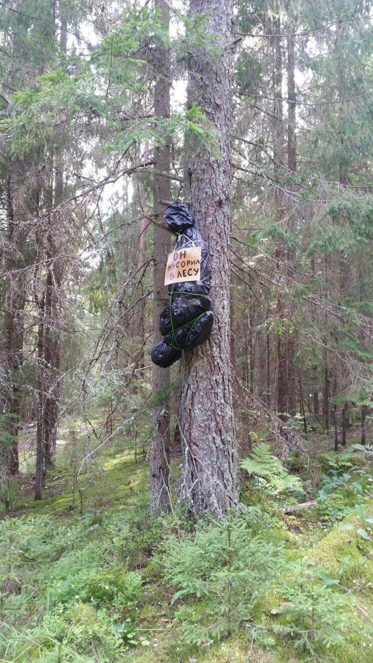 Не мусорте в лесу