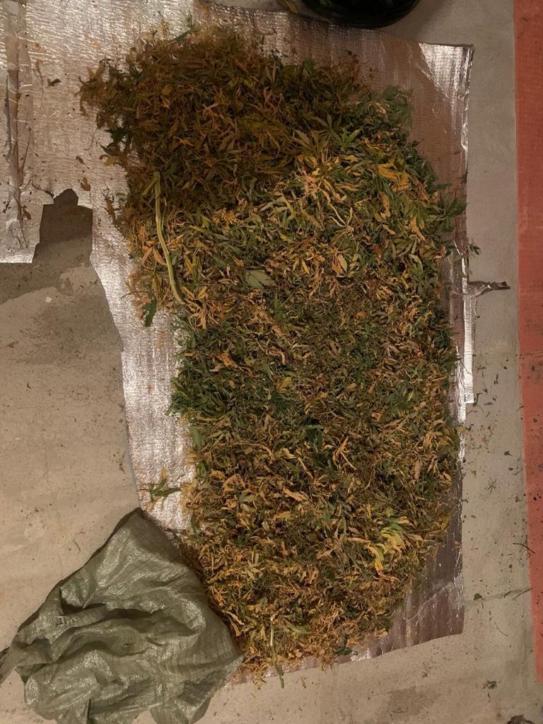Конопля лен область где у нас выращивают коноплю
