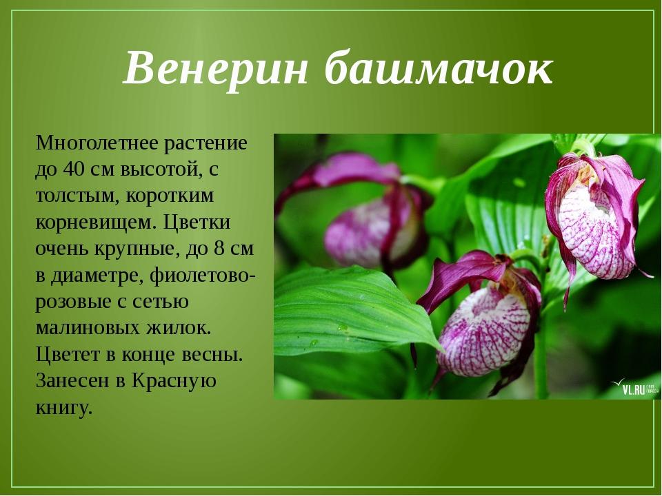 фото и краткое описание растений из красной книги