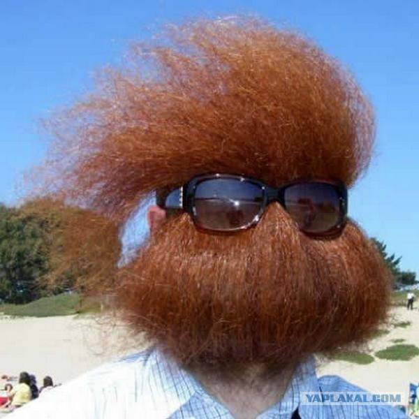 Хуй бородатый