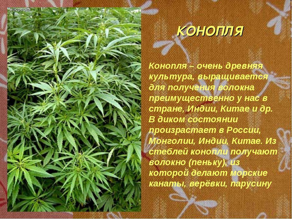 на нервную систему марихуана как влияет