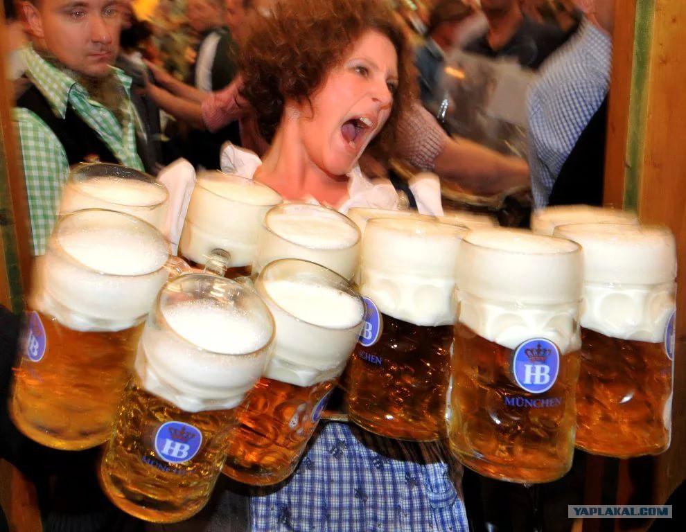 древесина смешные картинки и фото с пивом ищете прозрачные изображения