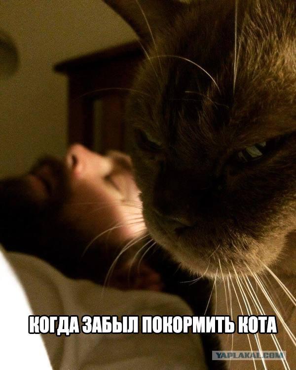 Мой ребенок говорит я кот