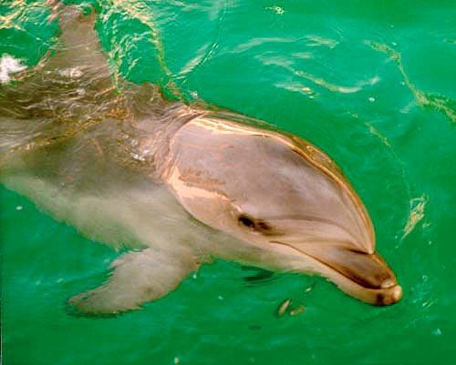 гладить дельфина во сне основная