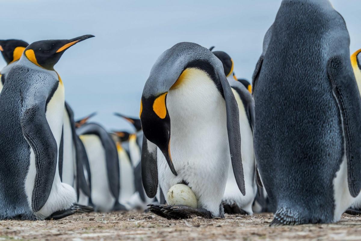 фото пингвинов с цветочками появилась