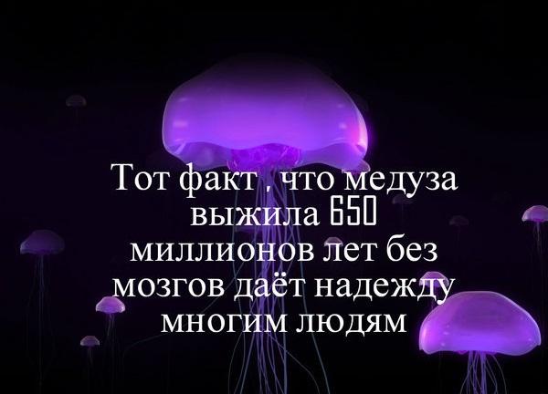 За фактом самогубства в СІЗО Дніпра сепаратистки Меньшикової розпочато кримінальне провадження - Цензор.НЕТ 2149