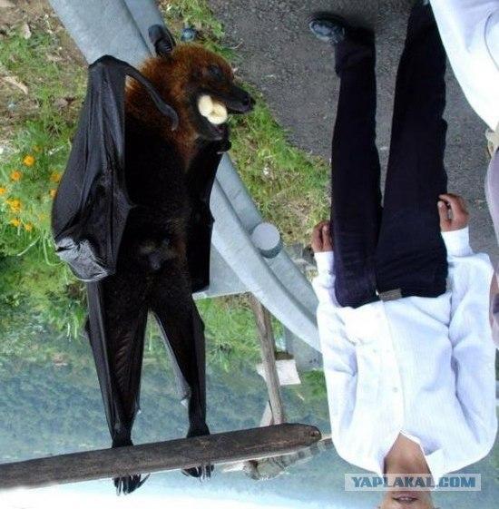 летающая собака фото