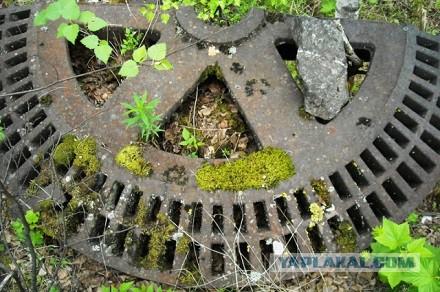Таёжные находки. Что находят в лесах Кузбасса туристы?