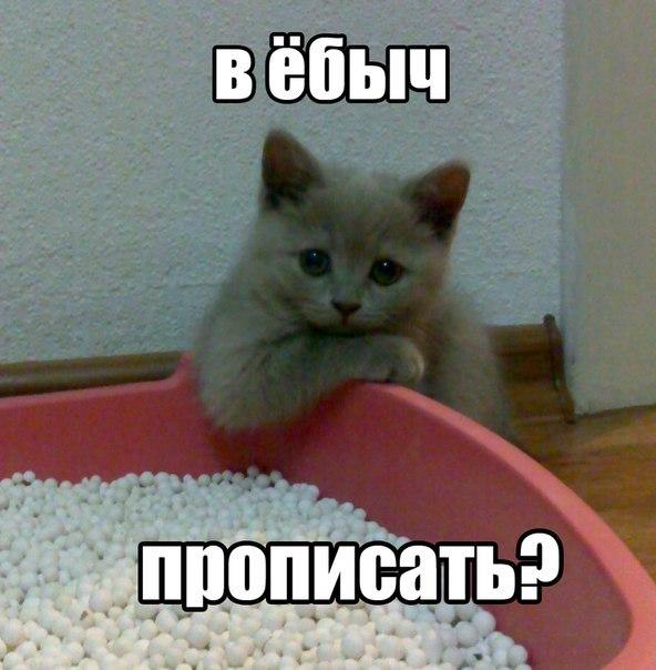 Когда заняться нечем кот