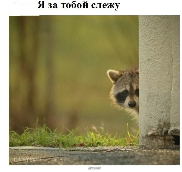 Чёрный ящик будет стоить от 100 тыс. рублей и потребует абонентскую плату