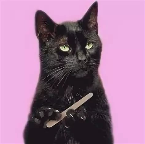 гифка с котом который ногти пилить нашем