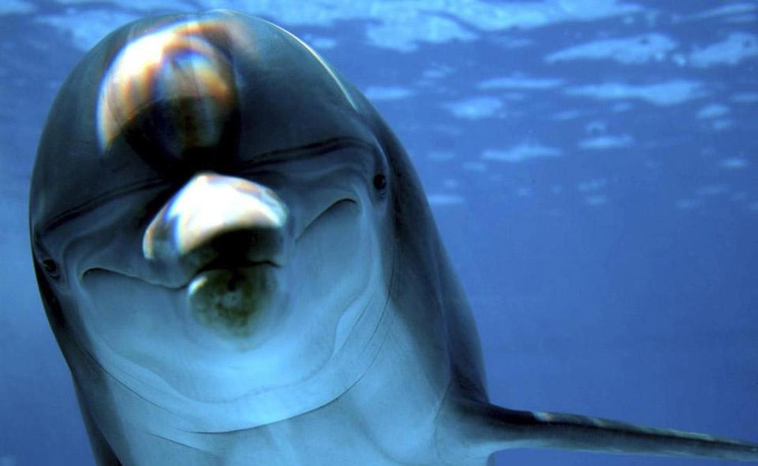 Может ли дельфин заняться сексом с человеком