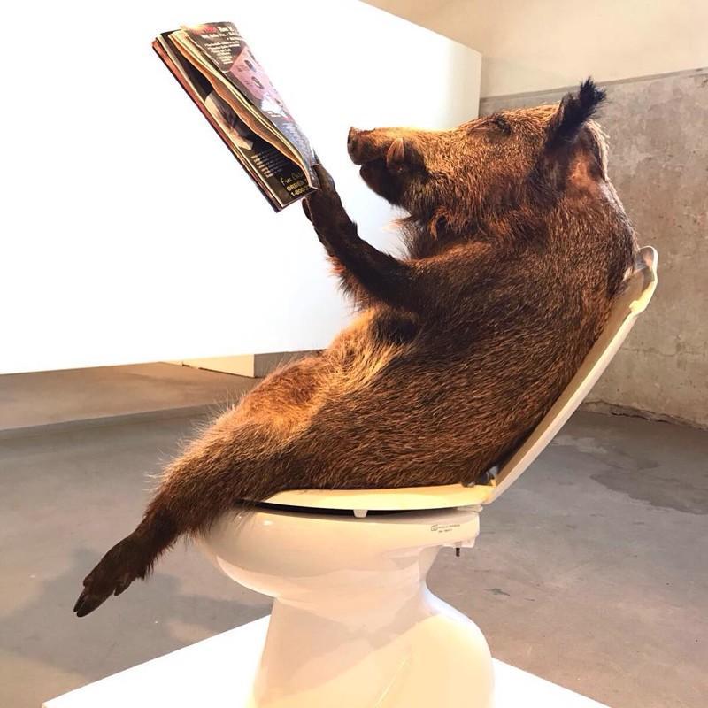 удивляется смешные чучела животных фото популярное легкое вино