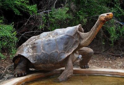 Иггры черепаха секс