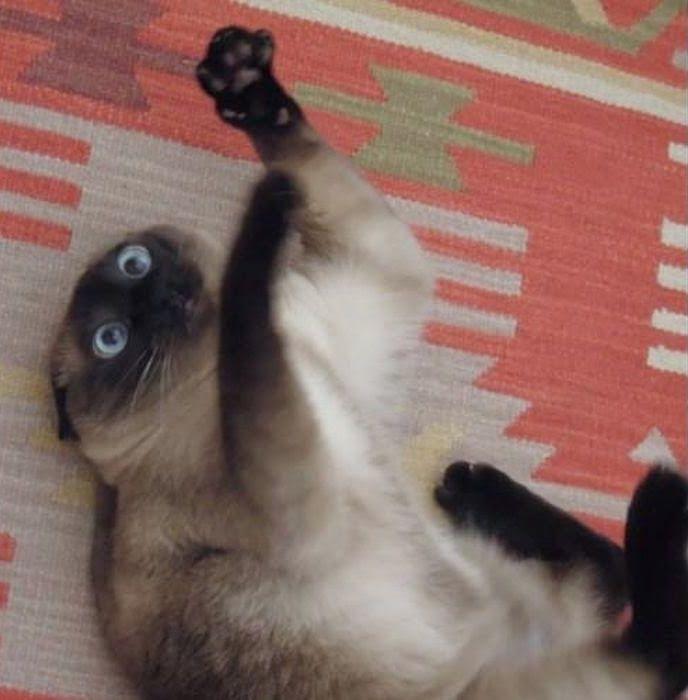 Фото кайфующего кота