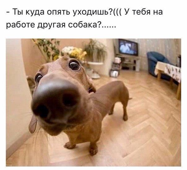 http://s00.yaplakal.com/pics/pics_original/6/9/2/7494296.jpg