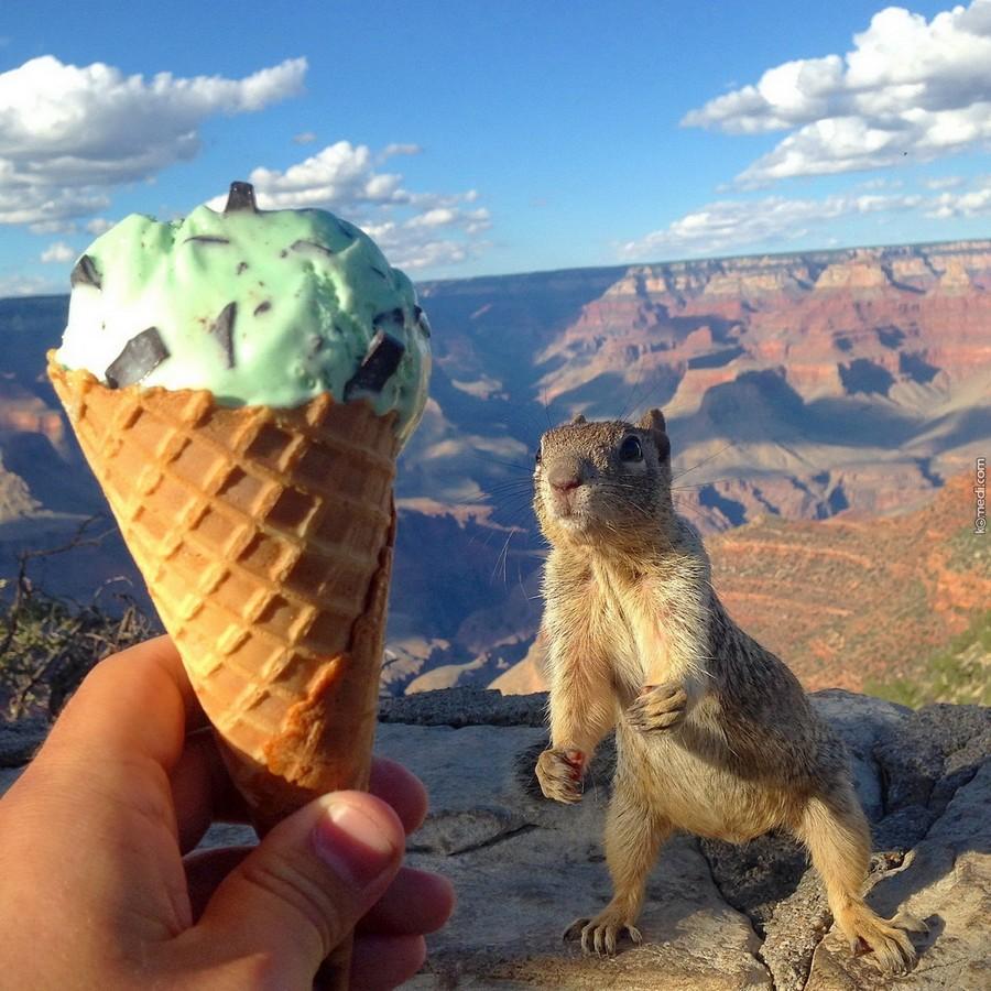 Прикольные картинки мороженка, пожеланиями спокойной ночи