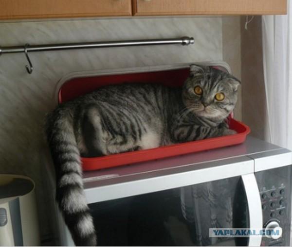 актуальные вакансии кот лазиет по столом что делать комбинезон для