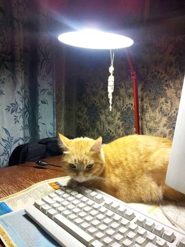 Самый грустный на свете кот. До и после приюта...