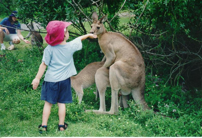 eroticheskoe-foto-chlena-u-kenguru