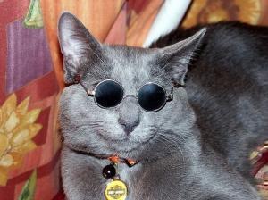 Нашел игрушечные очки и решил примерить на кота