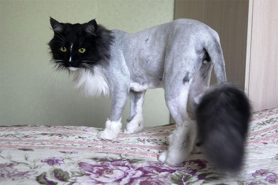 Кошка сильно похудела и сильно линяет