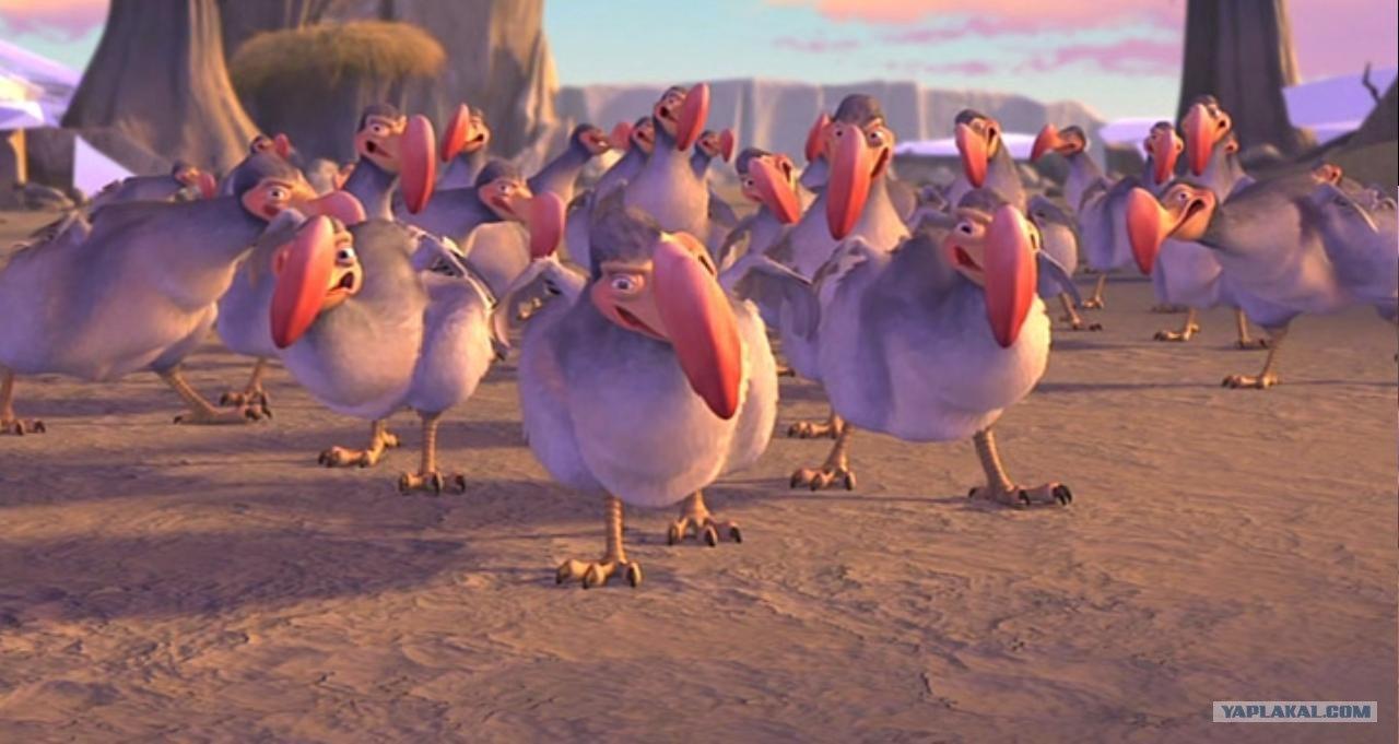 Смотреть картинки птиц картинка-заставка