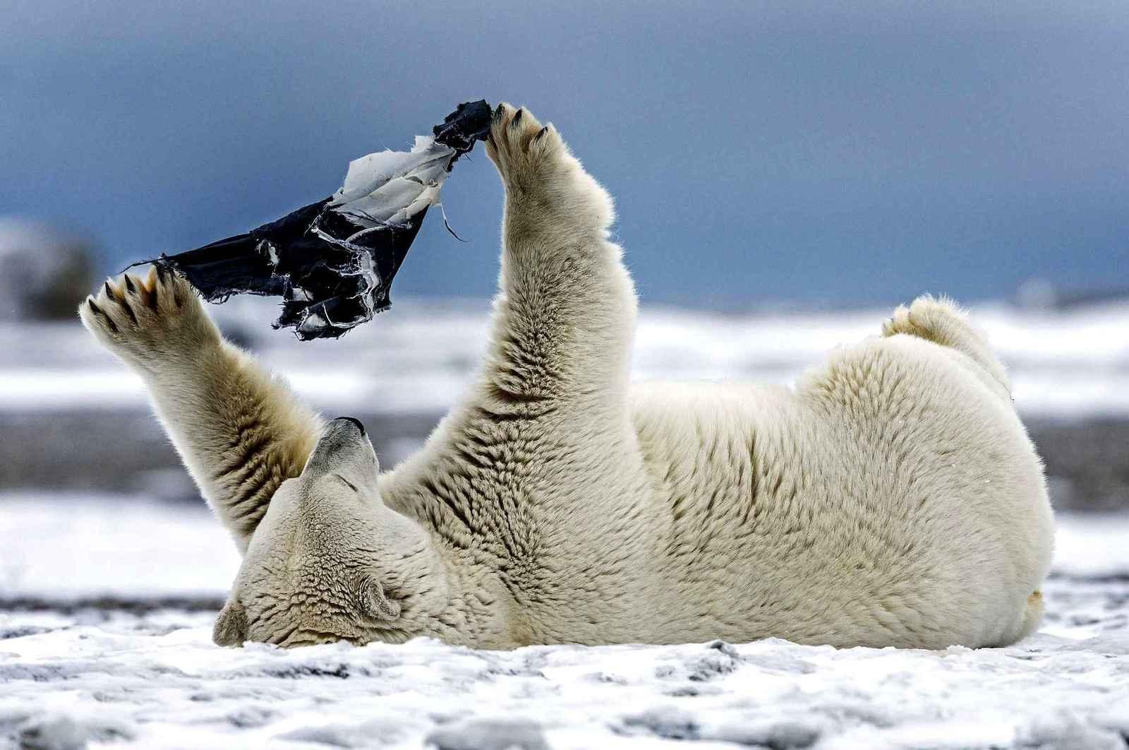 Прикольные фото белых медведей