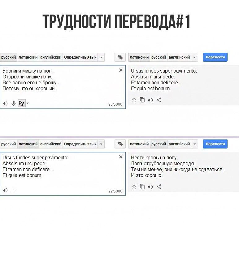 Лингва латина нон пенис конина