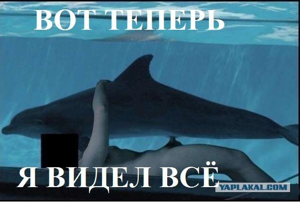 Секс самки дельфина с человеком
