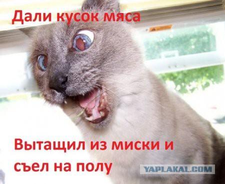 Я плакал фото котов