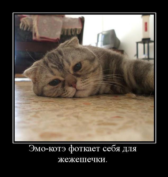 Кот депрессия демотиватор