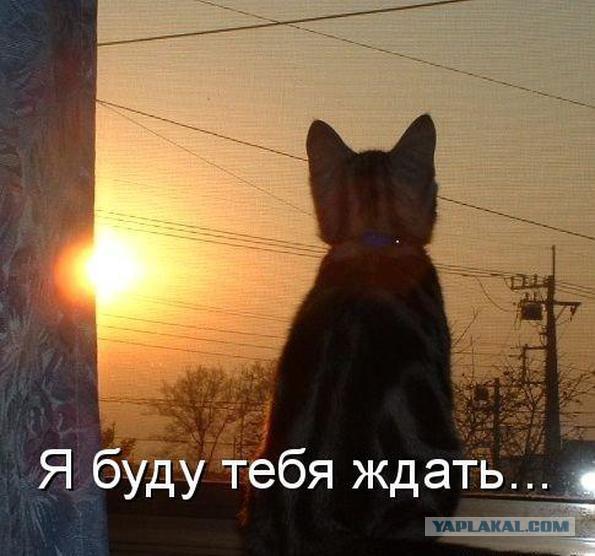 В России нашли портал в Нарнию!