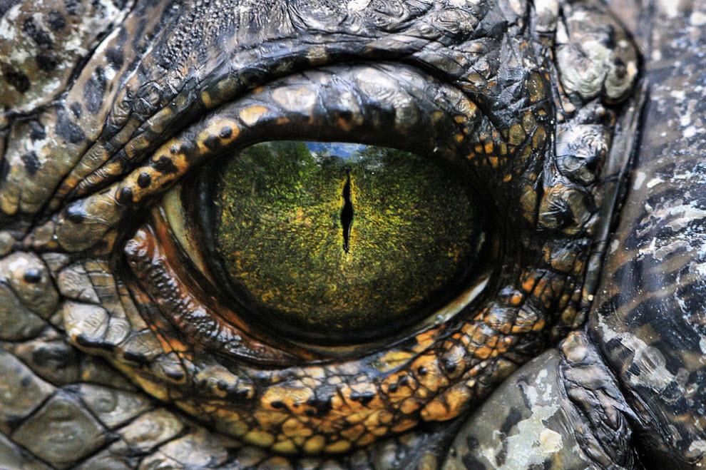 Zepic.org рептилия