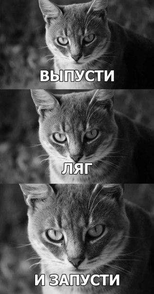 Демотиваторы дорогой ты кота впустил фотография