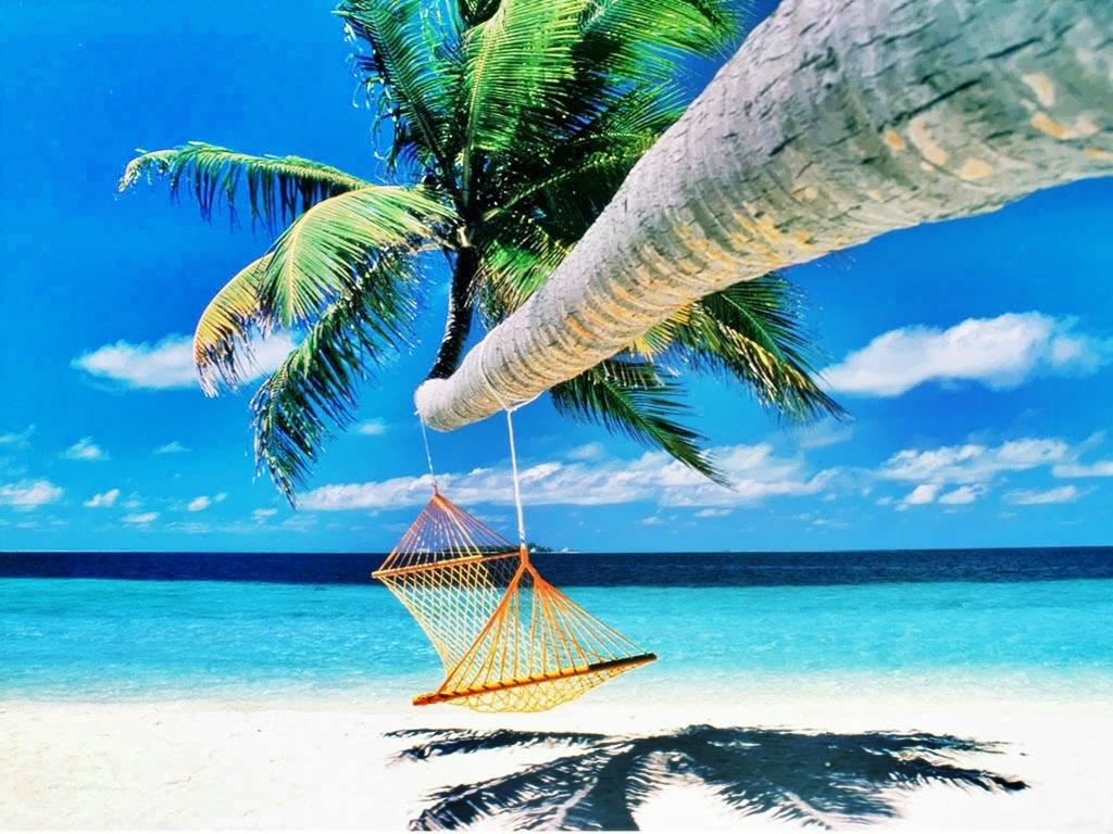 слонов отпуск в раю картинка курсор фотографию жмите