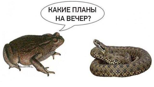 Дубінський просить САП перевірити, за чий рахунок його колеги із СН відвідали форум у Давосі - Цензор.НЕТ 3833