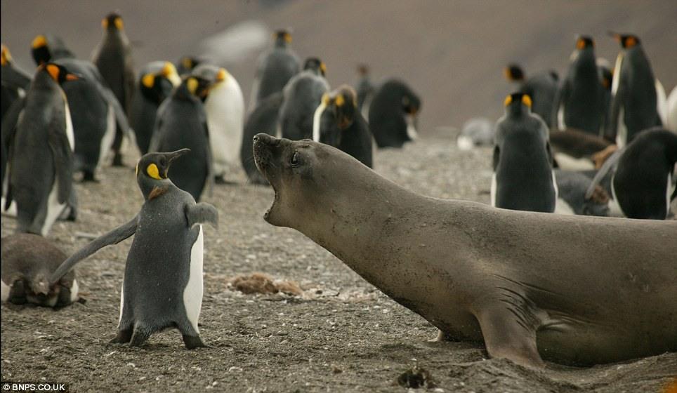 Год открытки, картинки тюленей с надписями