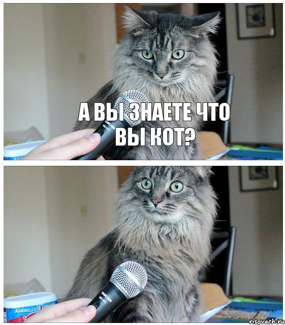 Кит и кот по украински