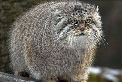 Коты с большой головой