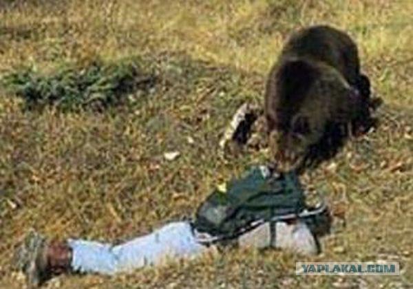 гуманитарный институт выживание в дикой природе встреча с медведем строительство беседок