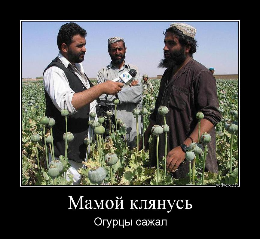 СБУ задержала четырех наркодилеров в Харькове: изъято кокаина на 5 млн гривен - Цензор.НЕТ 8406