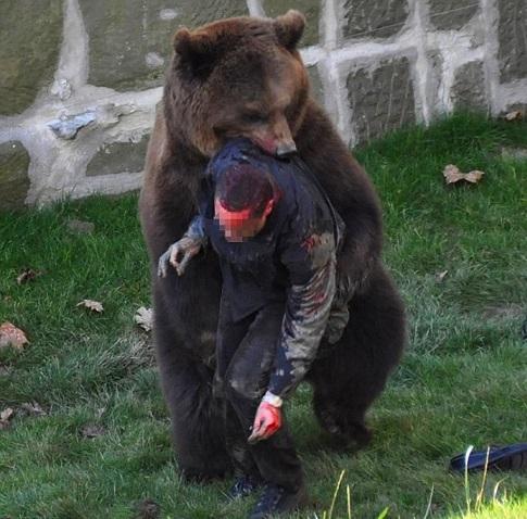 оставьте если сон где убегаешь от медведя всю правду себе