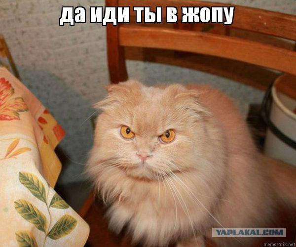 ацтань картинка с котиком семейку испугал