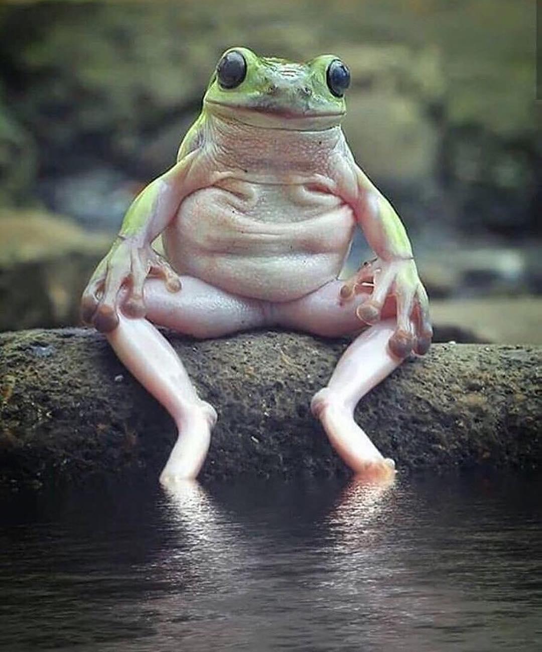 Приколы картинки жаба