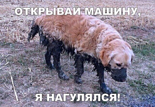 https://s00.yaplakal.com/pics/pics_original/7/7/0/13176077.jpg