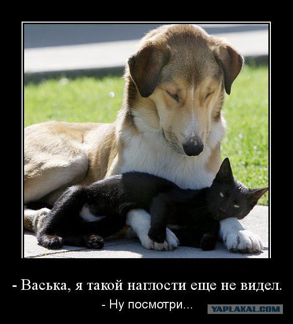 Демотиватор любовь к собаке
