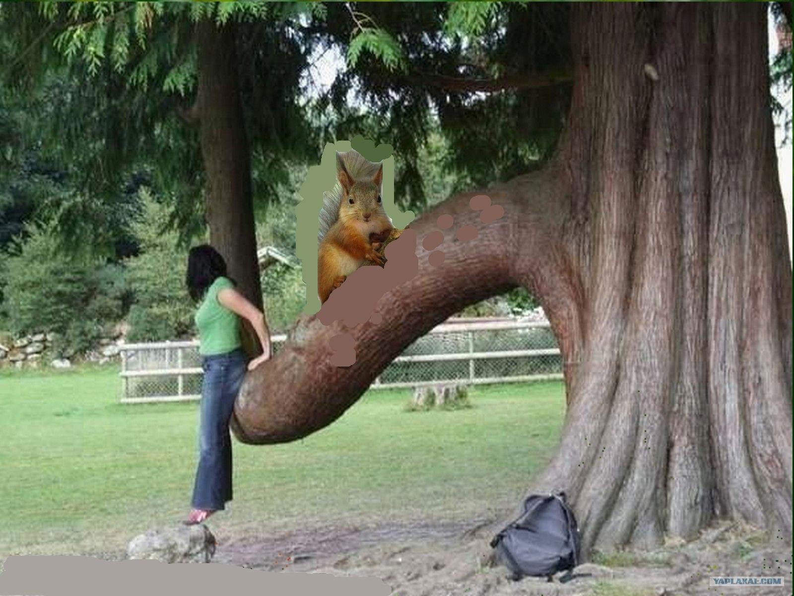 Смотреть онлайн бесплатно секс на дереве