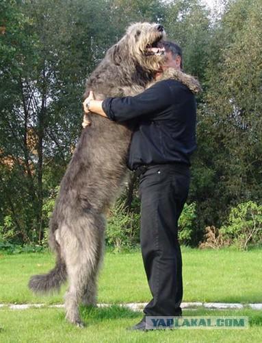 Собака друг человека - ЯПлакалъ